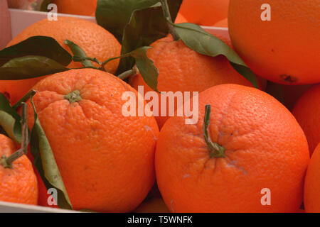 juicy oranges organically grown lie in wooden boxes on market, fresh and ripe oranges - Stock Image