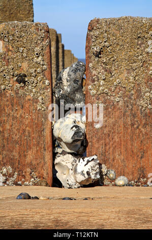 Flints wedged between breakwater posts on a North Norfolk beach at Bacton-on-Sea, Norfolk, England, United Kingdom, Europe. - Stock Image