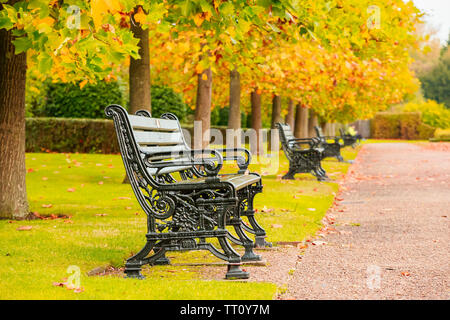 Tree lined avenue with benches in the Regent's Park of London - Stock Image