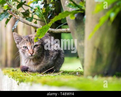 Stray kitten in Madeira island, Portugal. - Stock Image