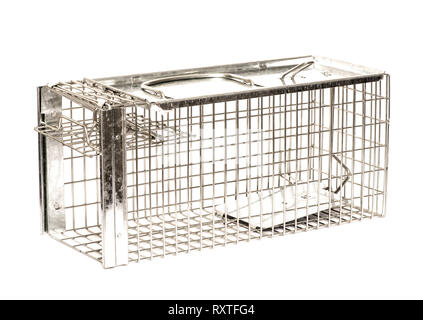Humane rat trap made of galvanised steel mesh on white background. Open and primed - Stock Image