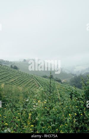 Vineyards on hills - Stock Image