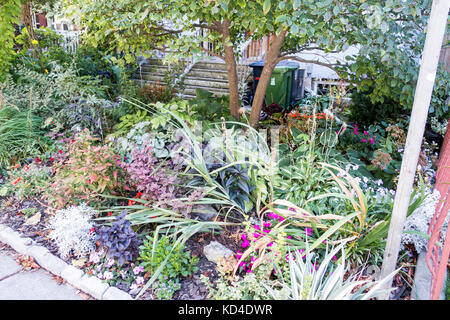Wildflower garden in residence front yard in downtown Toronto Ontario Canada - Stock Image