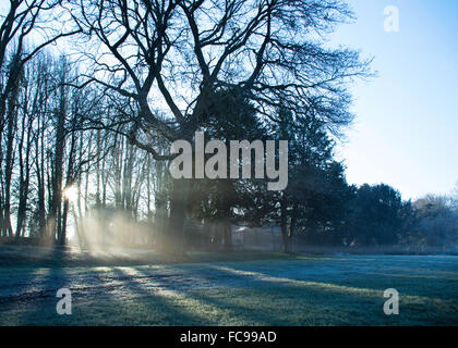 Sun Breaking Through Trees on a Frosty Morning - Stock Image