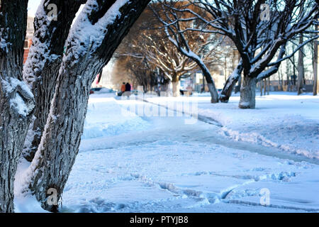 city street tree wood sun winter - Stock Image
