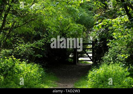 Secret gateway through trees Milton park, cambridge, 2019 - Stock Image