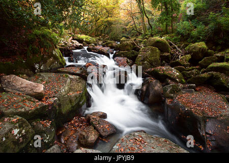 Autumn colours along the River Plym near Shaugh Prior Dartmoor National Park Devon Uk - Stock Image