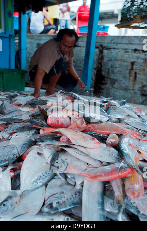 Fishermen sorting fish on their boat for sale at the fish market, Brunei - Stock Image