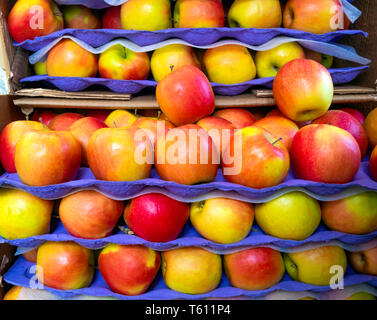 Colourful Pink Lady eating apples stacked for sale on a market stall - Stock Image