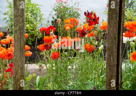 In the walled garden of Norton Conyers, Ripon, North Yorkshire - Stock Image