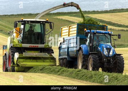 Agriculture - collecting grass for silage. The crops most often used for ensilage are the ordinary grasses, clovers, alfalfa, vetches, oats, rye and m - Stock Image