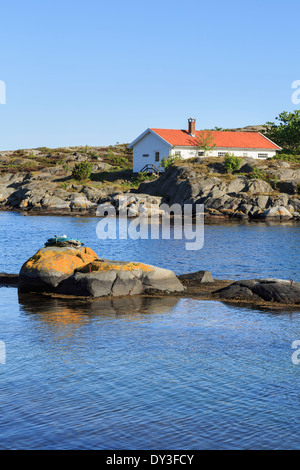 Gull nesting in a coiled rope on a rock in a rocky cove with summer cabin on south coast. Hovag Kristiansand Norway Scandinavia - Stock Image