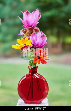 Pink curcuma alismatifolia or tumeric flowers and yellow and red zinnias or daisy flowers in a red vase. - Stock Image