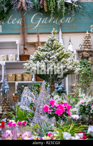 Small Christmas Tree with snow and Flowers in a Garden Store - Stock Image