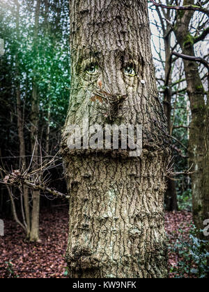 Funny tree face - Stock Image