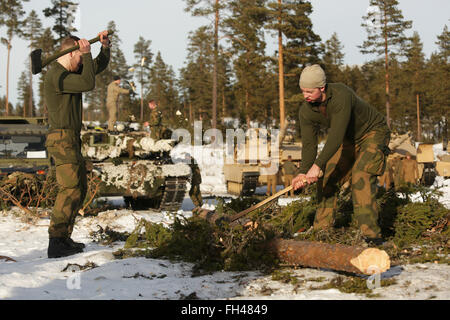 Members of the Norwegian Army's Telemark Battalion chop wood for a campfire during training in Rena, Norway, - Stock Image