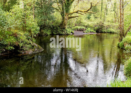 Image of a calm river flowing through green dense wood in Ireland. - Stock Image