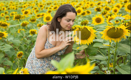 Outdoors portrait of smiling woman standing in field of sunflowers - Stock Image