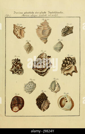 Neues systematisches Conchylien CabinetVol3TabC - Stock Image