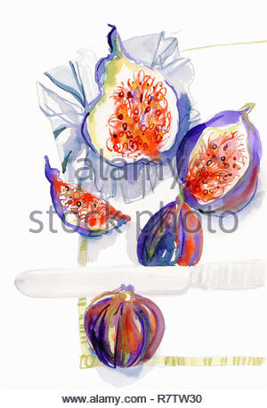 Watercolor painting of whole and halved fresh figs - Stock Image