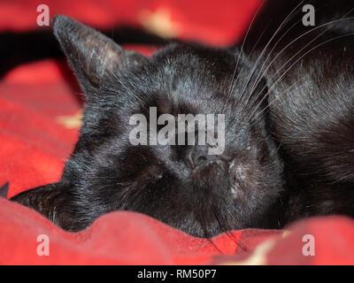 Sleeping black cat - Stock Image