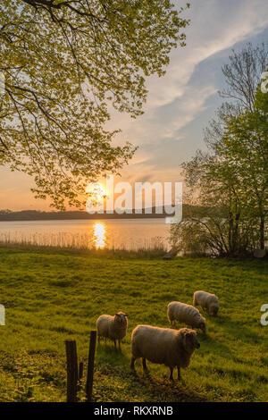 Lake Westensee, district of Rendsburg-Eckernfoerde, Schleswig-Holstein, Germany, Europe - Stock Image