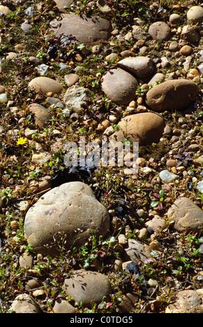 soil detail chateau de campuget rhone france - Stock Image
