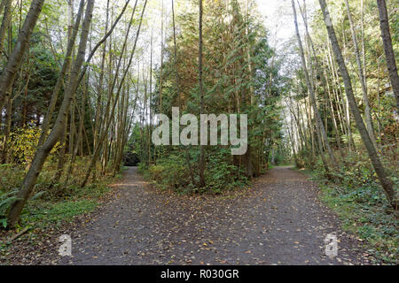 Diverging paths in Pacific Spirit Regional Park, Vancouver, BC, Canada - Stock Image