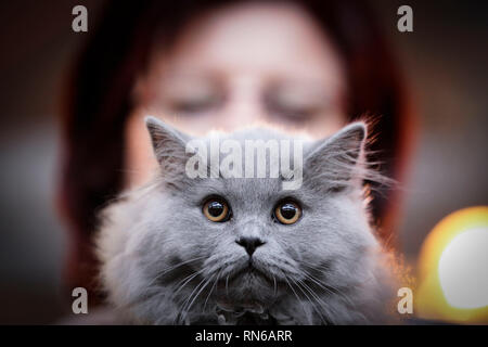 Warsaw, Poland. 17th Feb, 2019. A cat is seen during a cat exhibition in Warsaw, Poland, on Feb. 17, 2019. Credit: Jaap Arriens/Xinhua/Alamy Live News - Stock Image