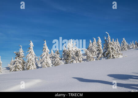 Beautiful winter landscape in the mountains. Tops of mountains covered with snow and green firs at the foothills. - Stock Image