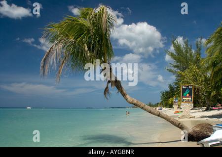 Jamaica Negril beach palm tree - Stock Image