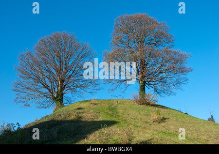 Two trees growing on Oxford Castle Mound, Oxford, England, UK - Stock Image