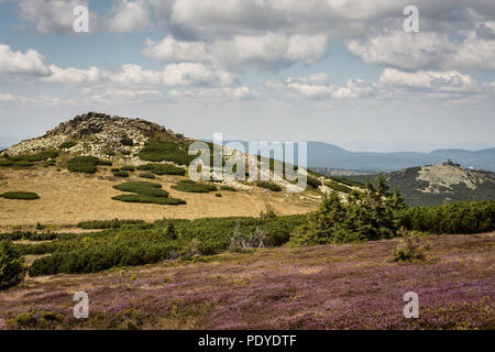 Giant Mountains in Poland, Central Europe, view with cloudy blue sky, rocky green hill and violet flowers - Stock Image