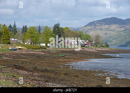 Bait digging by Rattan village on the shores of Loch Duich in Pintail district near Sheil Bridge, Highland Region - Stock Image