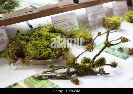 An educational moss display, at the Wildflower Festival at Mount Pisgah Arboretum in Eugene, Oregon, USA. - Stock Image