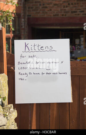 Handwritten sign outside a private house advertising  British shorthair  kittens for sale. - Stock Image