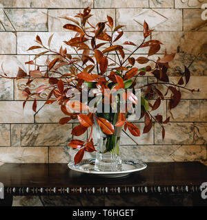 Photinia (Red Robin) branches with red and green leaves in a vase, still life with earthy tones - Stock Image