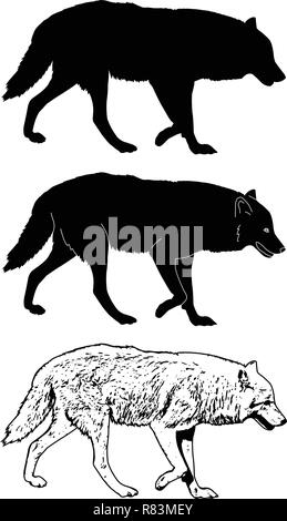 wolf silhouette and sketch illustration - vector - Stock Image