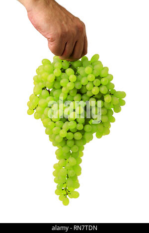 Green grape bunch in man's hand isolated on white background - Stock Image