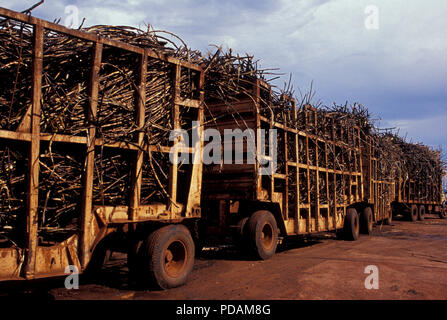 Sugarcane transported in trucks from field to factory for ethanol production in Mato Grosso do Sul State, Mid-west Brazil. - Stock Image
