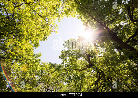 Directly below view of trees against sky - Stock Image