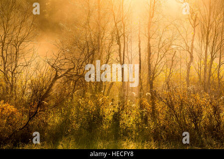 Morning mist and trees - Stock Image