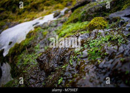 natural growth in the wilderness - Stock Image