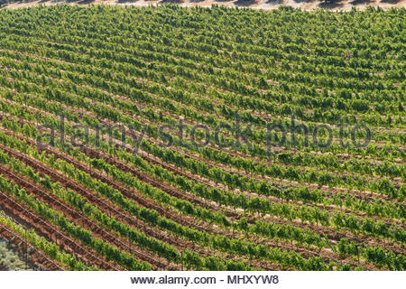 High Angle View Of Vineyards In Franschhoek Region Of Western Cape In South Africa - Stock Image