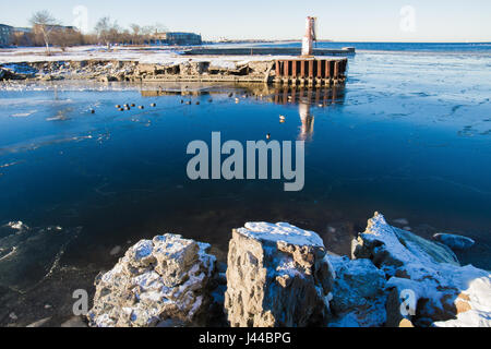 Viking ducks in winter wimming in cold sea near small jetty - Stock Image