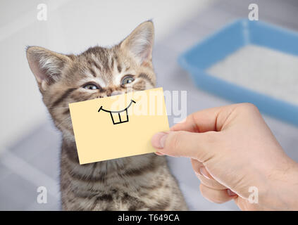 funny cat with smile on cardboard sitting near litter box - Stock Image