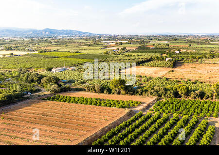 green and yellow fields in Tarragona from above, agricultural industry aerial view - Stock Image