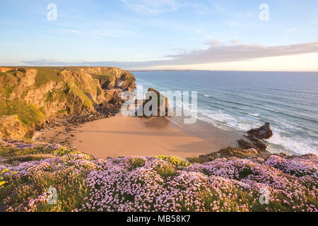 Wildflowers on the cliff tops at sunset,. Bedruthan steps Cornwall Uk - Stock Image
