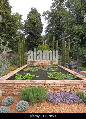 An attractive water garden with water lilies in a woodland setting of Cyprus trees - Stock Image