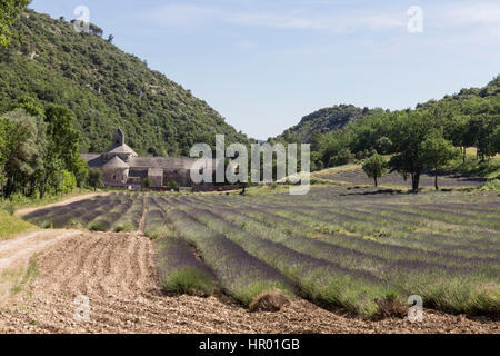 Senanque Abbey Provence France - Stock Image